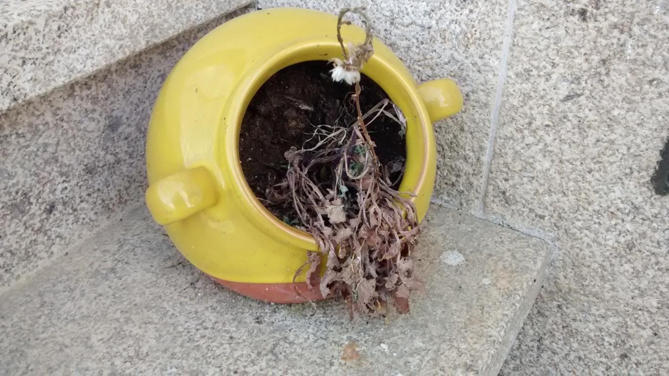 Maceta con planta seca